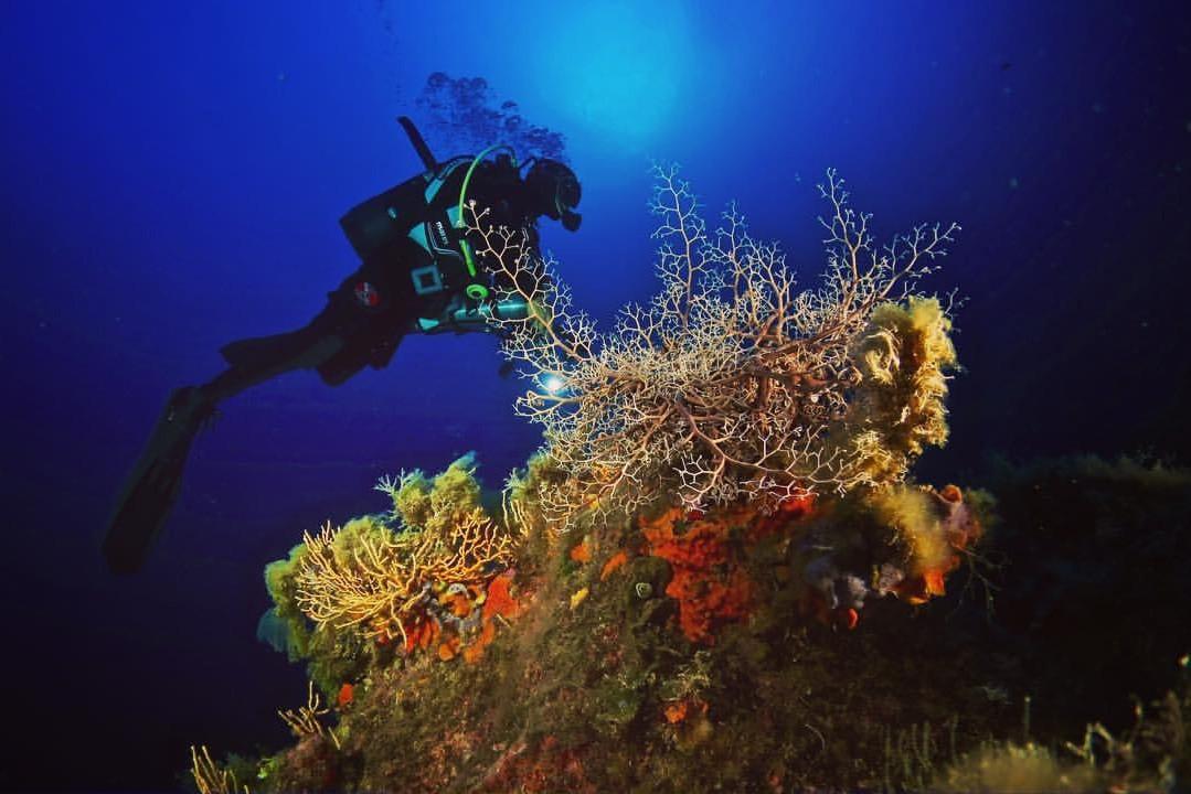 Doppia immersione nelle acque dell'isola di Pianosa
