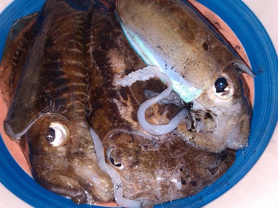 Giornata di pesca in caicco a Nettuno