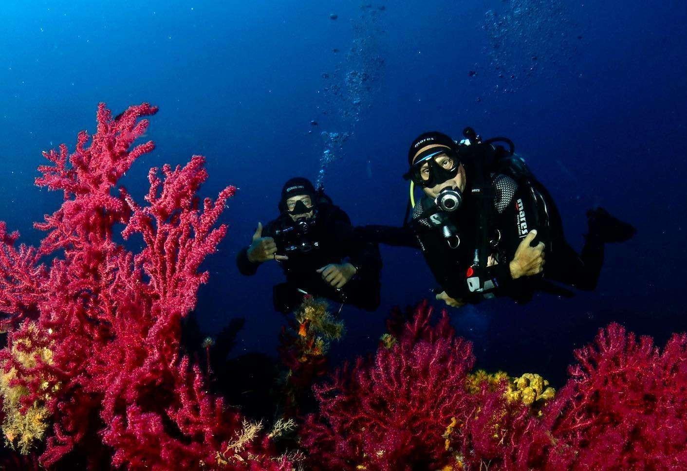 Immersione subacquea sui fondali nascosti dell'Isola d'Elba