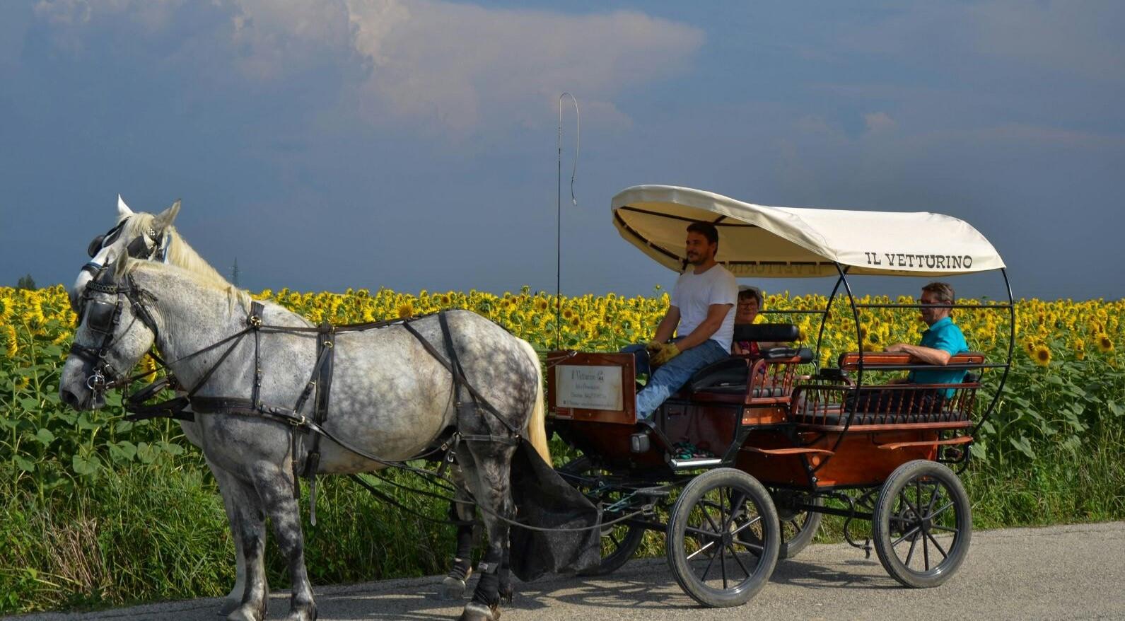 Passeggiata in carrozza a Rivotorto e degustazione di vino