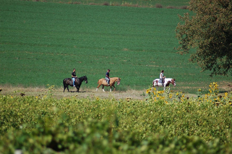 Passeggiata a cavallo e aperitivo in sella in provincia di Perugia
