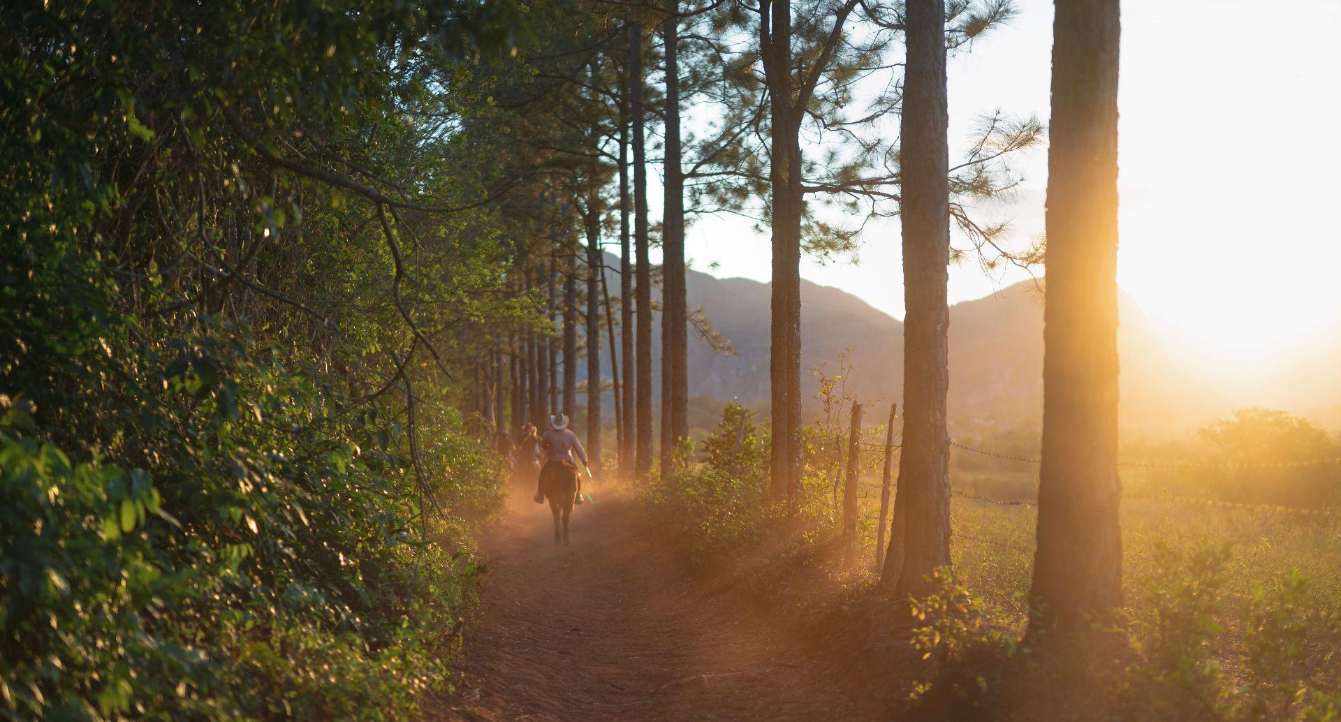 Passeggiata a cavallo sul Monte Amiata