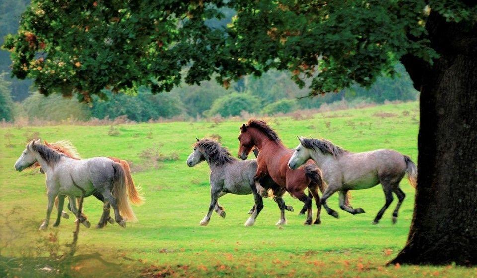 Passeggiata a cavallo di 1 ora nel Parco di Veio