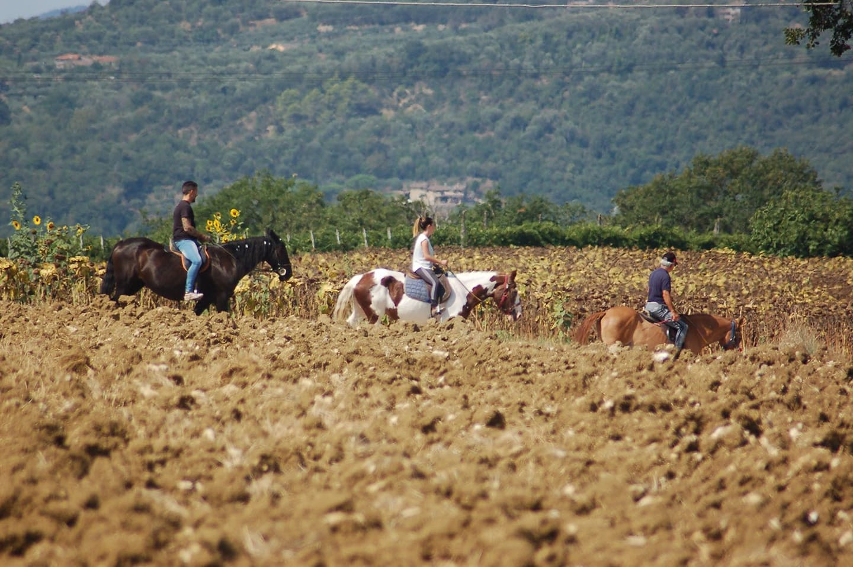 Passeggiata a cavallo in provincia di Perugia