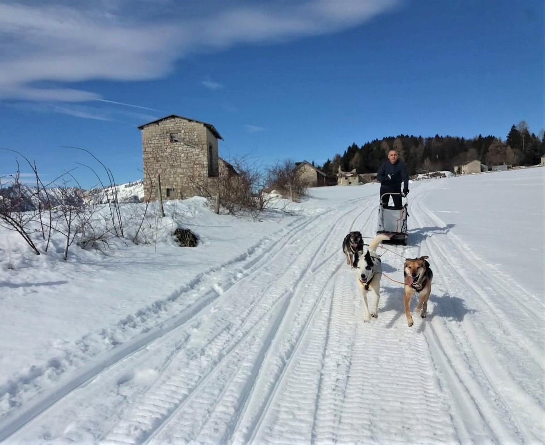 Sleddog Experience in provincia di Trento
