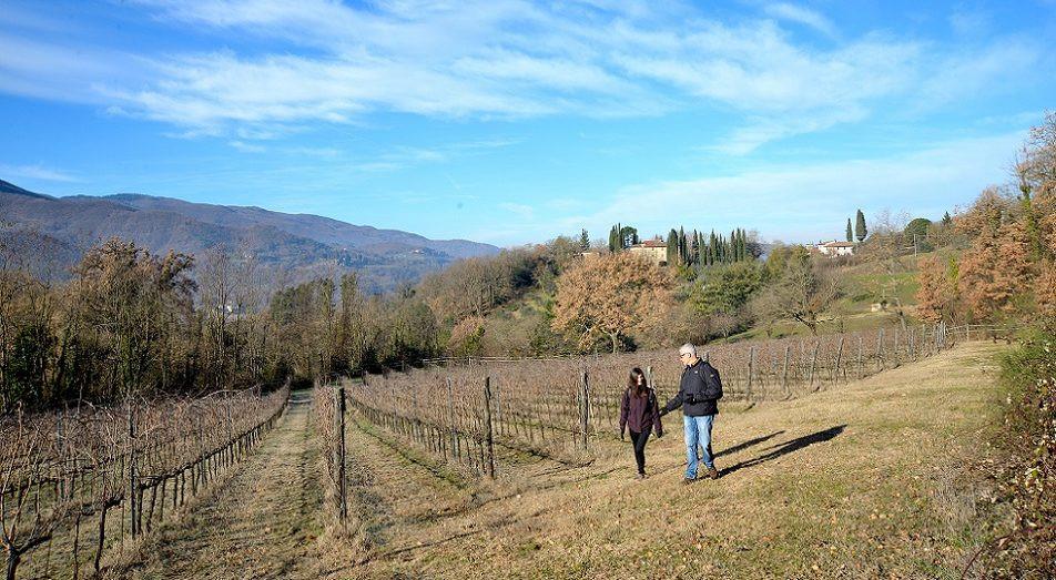 Trekking in Mugello e degustazione di vino Chianti Rufina