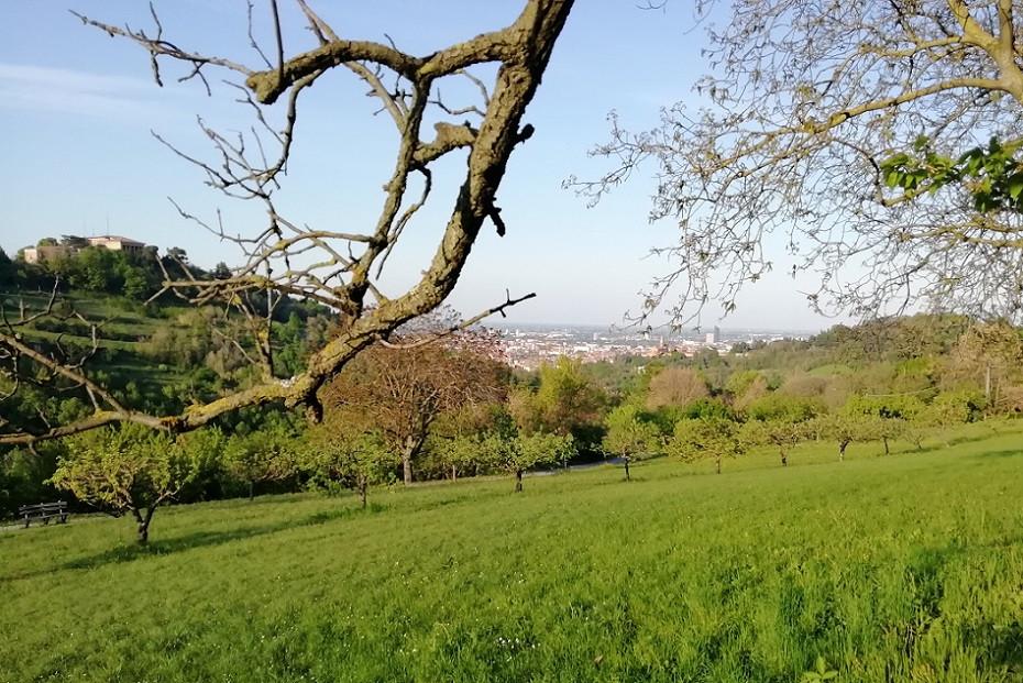 Trekking tour panoramico sui colli bolognesi
