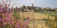 Pedalata sui colli del Chianti e degustazione di vino