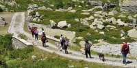 Dog Trekking nei boschi Trentini